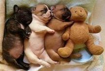 Pick Your Puppy / by ProbioticSmart.com