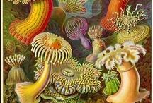 amazing art: botanicals & scientific / by Bren Tiel