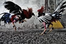 Critters:  Birds / by Netta Kanoho