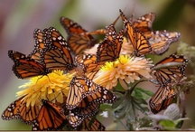 Butterflies / by Belinda Beebe