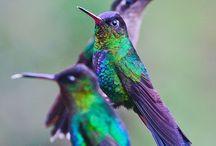 Dragonflies & Hummingbirds / by Lori Davies