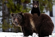 Wild & Wooly / by Susan Musso