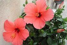 flores / by Rose Munhoz da Rocha