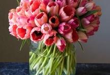 Flowers!!! / by Linda Reyes-Alicea