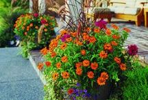 Garden / by Carrie Ransom