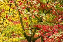 Fall is coming / I love fall <3 / by Lucy's Home Ideas