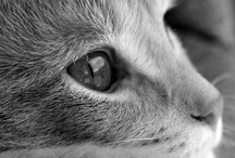 """Pusses / """"Of all God's creatures, there is only one that cannot be made slave of the lash. That one is the cat. If man could be crossed with the cat it would improve the man, but it would deteriorate the cat."""" - Mark Twain / by Kevin Palczynski"""