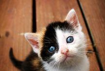 Crazy cat lady :) / by Ashley Burkhart