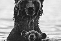 Oh mama / by Julie Oda