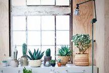 Plants / by Mariana David