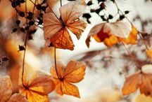 Autumness / by Louise Barbara
