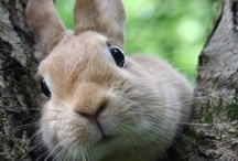 Bunnies / by Marianne Bondalapati