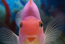 Fish / by Marianne Bondalapati