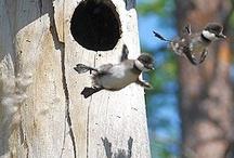 Birdhouses & Birds / by Norma Karmann Parisan