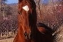 ADOPT! Horses available for adoption- many urgent / by Annette (gr3een)