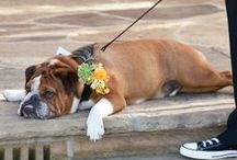 Wedding Pets / by Donna Graham