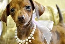 Doxie Love / by Hearts Desire Gifts