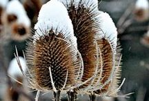 Winter / The chill of winter...Every day in Wintertime is one day nearer Spring. / by Laura Leonetti. Passions,defined