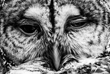 owls go hoot in the night / by g e r a L d i n e S t o n e