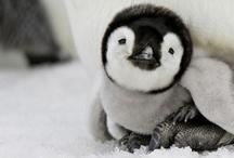 penguins! / by Krystal Thompson