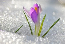 mY sECRET gARDEN / by Jennifer Schmidt