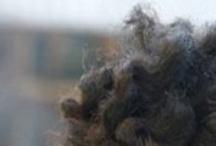 Hair Styles / by Sephora Rene