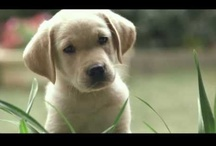 Dog Videos - Best of the Best / The World's Best Dog Videos on #YouTube and #Vimeo | http://www.buzzfeed.com/mattbellassai/the-40-greatest-dog-gifs-of-2012-6z51 / by We Love Dogs ♥ Guide Dogs Worldwide ♥