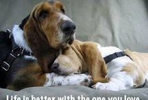 {GROUP} Basset Hounds - Best Dog Breed Ever! / by We Love Dogs ♥ Guide Dogs Worldwide ♥