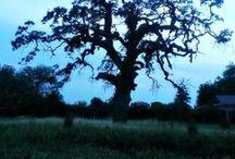 Tree Lo♥e / by Brandy Gray