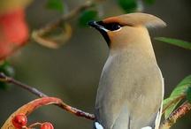 Birds / by Malinda Gregory