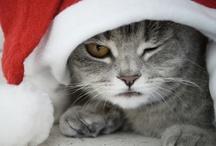 Navidad / Todo el contenido visual aquí es propiedad de sus respectivos dueños. Si usted es dueño de los derechos de cualquier imagen que se encuentra aquí y no desear que aparezca, por favor deje una nota con la imagen, y será eliminado. / by Mabaisan