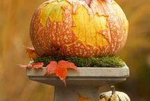 Holidays and Seasons / by Patty Moye