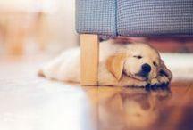 cuteness / by Louisa Makaron