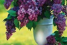 Home - Vases and Filler / by Jan Horwood