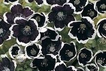 Garden - Annuals / by Jan Horwood