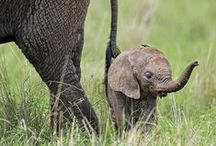 Mommy / mom  / by Patty Peterson