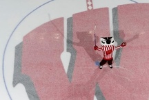 Wisconsin Badgers / by Cathy Doyle
