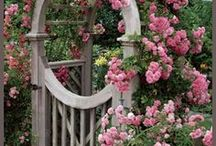 Gardening Ideas / by Yvonne Keislich