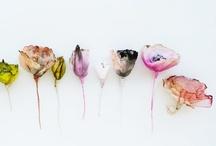 FLOWERS / by Shoko Ishibashi