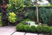 gardens & landscaping / by Ana Marie Lasich