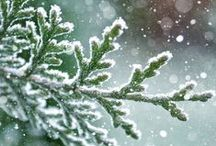 """If winter comes.... / """"O, wind, if winter comes, can spring be far behind?"""" / by Wendy Nowack"""