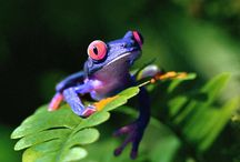 """~AMPHIBIANS... / C.S. Lewis used the biphasic nature of amphibians as a metaphor for the human comdition-- """"Humans are amphibians: half spirit and half animal.  As spirits they belong to the eternal world, but as animals they inhabit time.""""  / by R.J. Miller"""