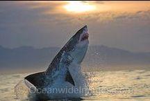 Sharks/Rays  / by Zandra Burt