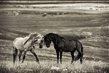 Horses / by Zandra Burt