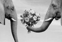 Elephants!!! / by Elinore Hooven