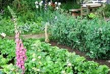 Kitchen Garden Love / by Heather Ferris