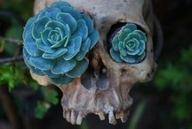 Skull Candy / by Dee Coy