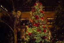 Christmas / by Kim Dillon