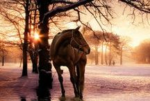 Hold Your Horses / by Debra Lyons