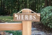 herbs / by Susanne Carr